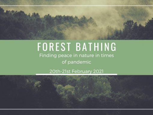 #68 Forest Bathing
